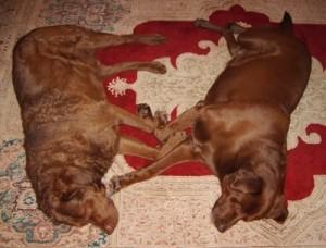 Hagan and Bear make a heart between them